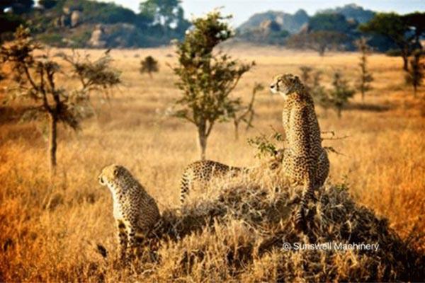 SSW-Tanzania